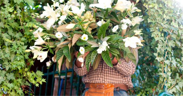 agriflor negozio fiori siena