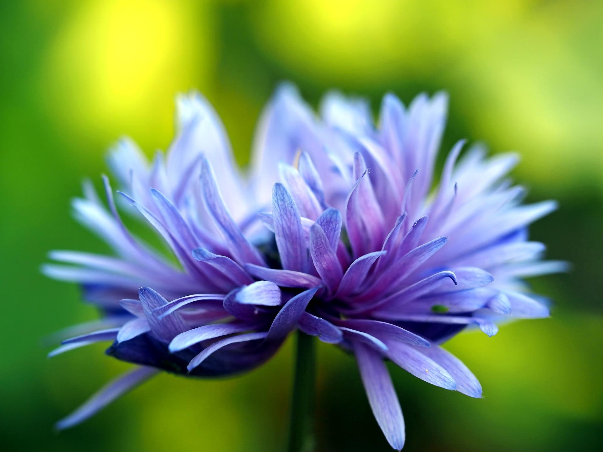 i fiori della primavera sono i sogni dell'inverno